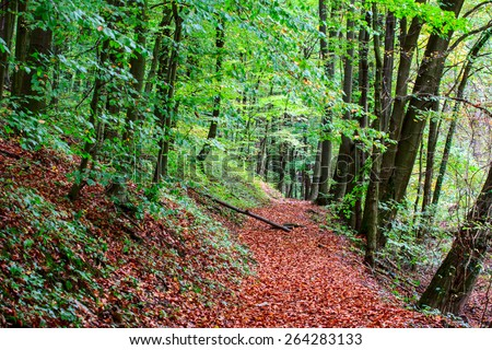 Pathway through the autumn forest in Hungary - stock photo