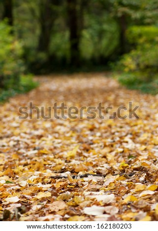 Pathway through the autumn forest.Very shallow DOF - stock photo