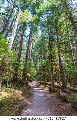 pathway to beautiful Madison falls in olympic national park,Wa,Usa - stock photo