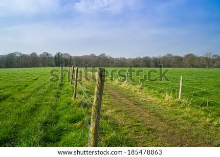 Pathway to the Northwest English woods. - stock photo
