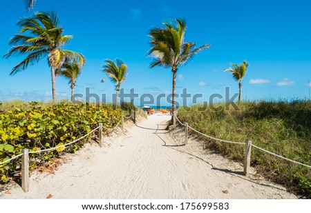 Pathway with palm trees to Miami Beach. - stock photo
