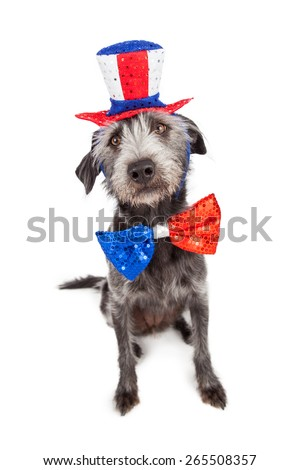 Patriotic Independence Day dog sitting wearing a red, white and blue hat and bow tie - stock photo