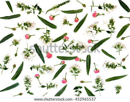 pattern frame with roses, rose buds, branches and leaves, flowers, phlox, isolated on white background. flat layout, top view - stock photo