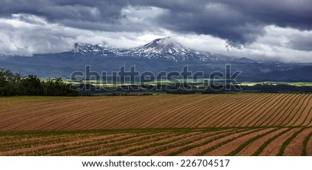 Pattern green field with mountain ranges background, Furano, Hokkaido, Japan - stock photo