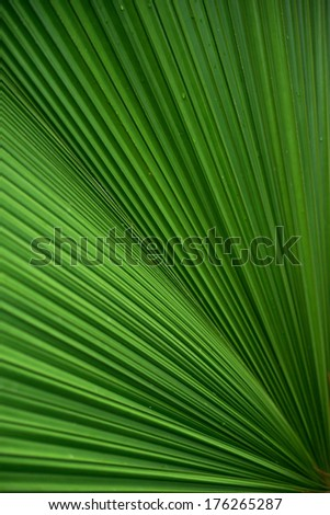 Pattern of a large palm leaf. - stock photo