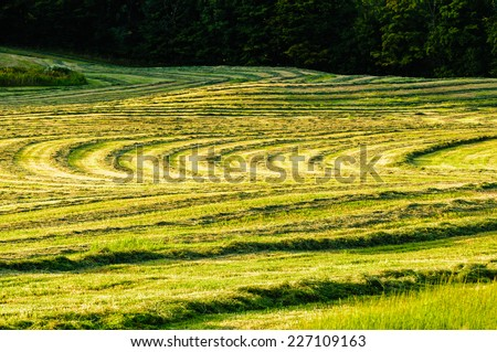 Pattern of cut hay on a warm late summer afternoon in Johnson, Vermont, USA. - stock photo
