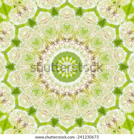 Pattern of Dandelion faded white head against green background - stock photo