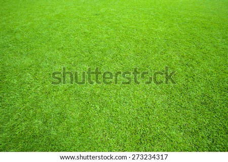 pattern of green grass field use as background,backdrop,natural texture - stock photo