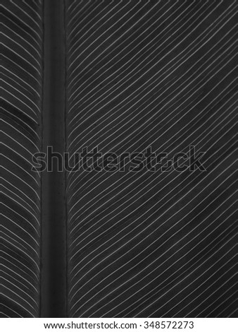 Pattern of green leaf in black and white  - stock photo