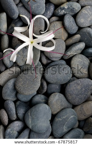 Pattern of grey river stone pebbles with flower, background - stock photo