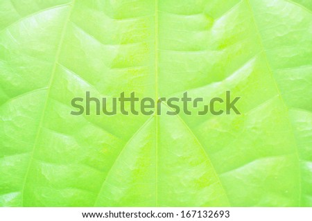 Pattern of leaf textures background - stock photo