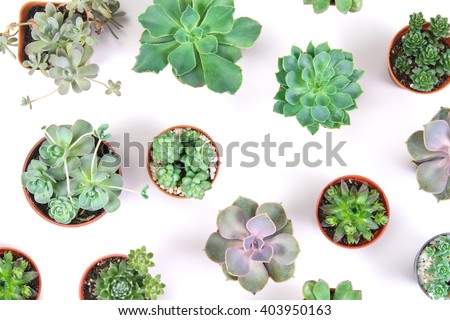 pattern of mixed succulents plant in pot pattern on white background , overhead or top view - stock photo