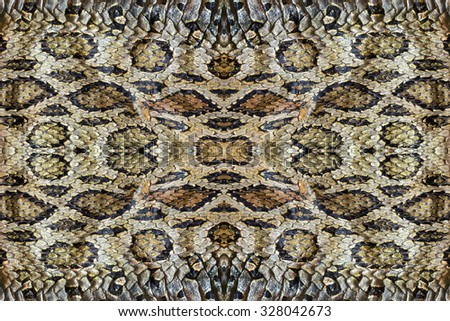 pattern of  snake skin. - stock photo