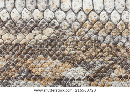 Pattern of the snake skin texture for background - stock photo