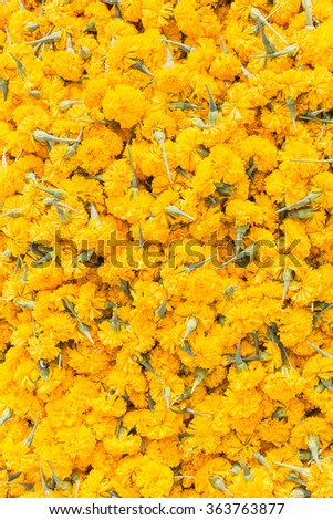 Pattern pile of yellow marigold flowers for texture and background - stock photo