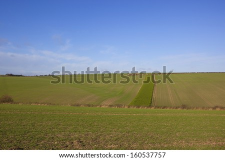 patterns and textures of seedling crops in the rolling landscape of the yorkshire wolds in autumn - stock photo
