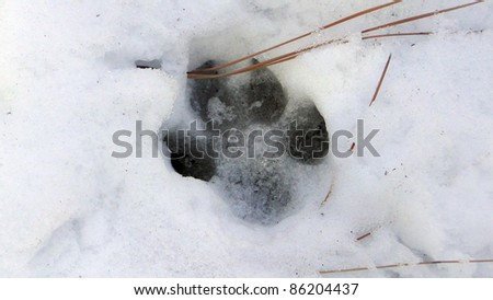 Paw Print in the Snow - stock photo
