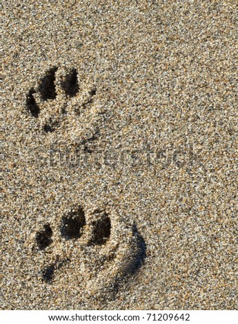 Paw Prints in Sand - stock photo