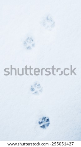 pawprints of a dog on a snow  - stock photo