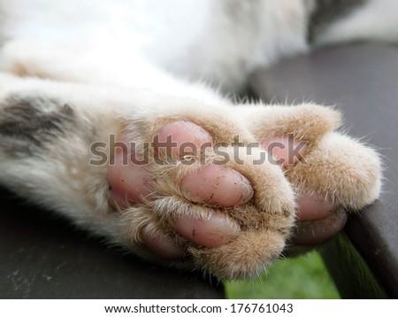 Paws cat close-up - stock photo