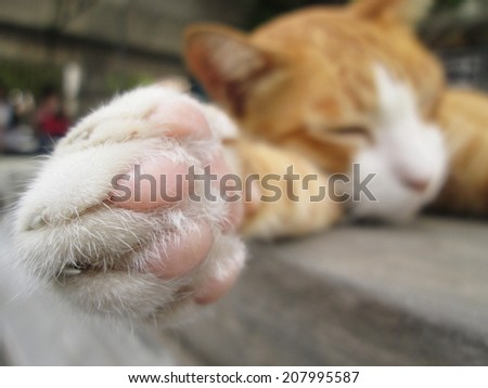 Paws cat close-up - stock photo