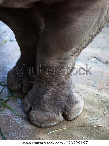 Paws rhino - stock photo