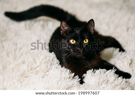 Peaceful Black Female Kitten Cat Lying In His Bed On A White Rug - stock photo