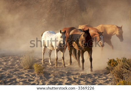 Peaceful morning on the ranch with horses walking with pretty light and dust in the air - stock photo
