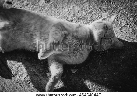 Peaceful orange red tabby cat male kitten curled up sleeping black&white  - stock photo