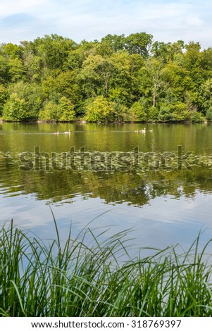 Peaceful scene of a pond in a forest with ducks swimming - stock photo