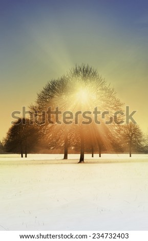 Peaceful scene of trees in snow with sunlight breaking through the canopy - stock photo