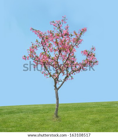 peach blossom bloom in an lawn  - stock photo