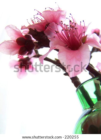 peach blossoms, green vase - stock photo