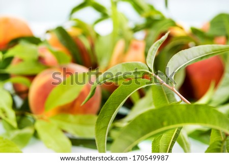 Peach. Fruit background. Soft focus - stock photo