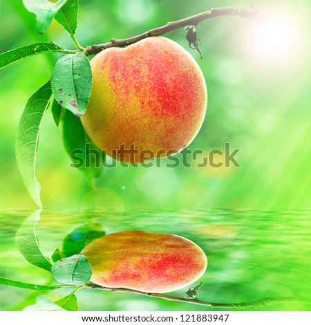 Peach growing rapprochement for adv or others purpose use - stock photo