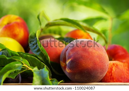 Peach on basket of various fruits - stock photo