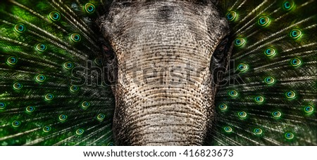 Peacock and elephant Abstract - Indian animals - stock photo