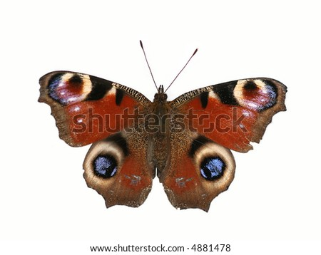 Peacock butterfly isolated  on the white background - stock photo