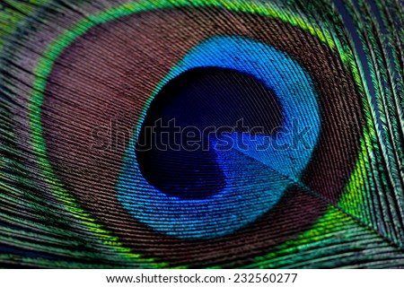 Peacock eye feather - Closeup, Low key - stock photo