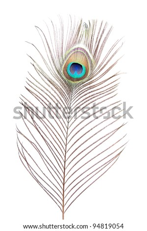 peacock feather isolated on white background - stock photo