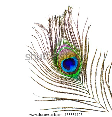 Peacock feather on a white background - stock photo