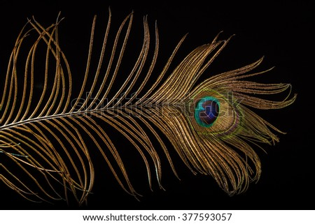 Peacock feather on black background - stock photo