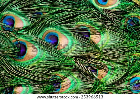Peacock Feathers - Layered Peacocok Feathers in Painted Style  - stock photo