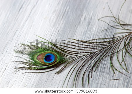 Peacock feathers on wooden grey background with copy space, selective focus. - stock photo