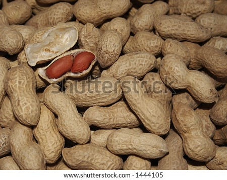 Peanuts in the shell (Arachis hypogea) 2 - stock photo
