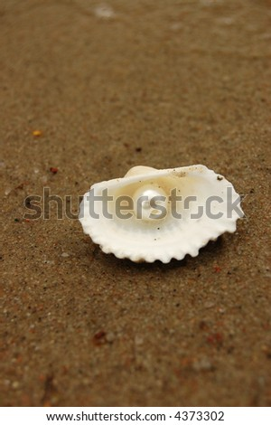 Pearl in shell - stock photo