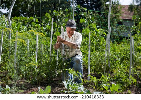 Peasant with hat working in vegetable garden - stock photo