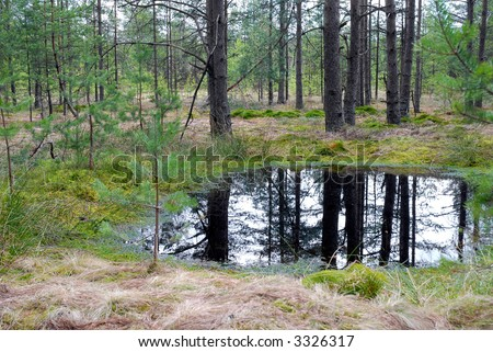 Peat-bog - forest marshland - stock photo