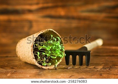 Peat pots and garden tool on wood background - stock photo