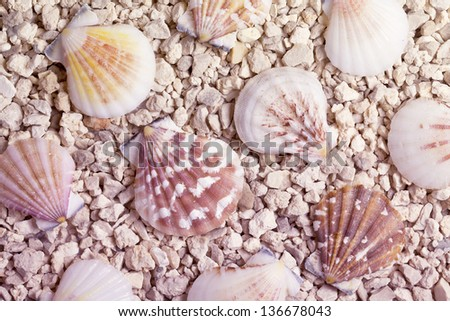 pebble beach with shells background - stock photo